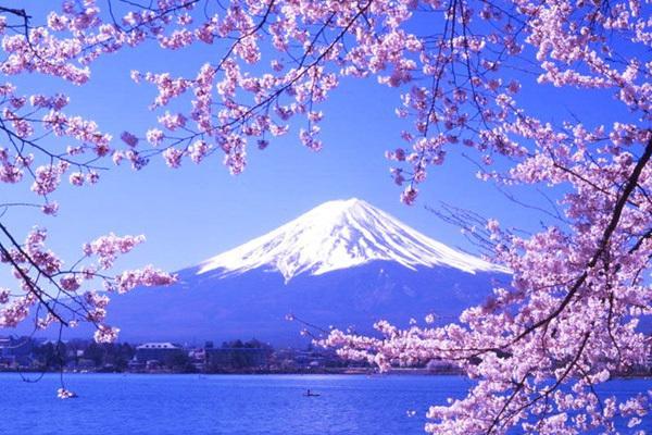 樱花,sakura