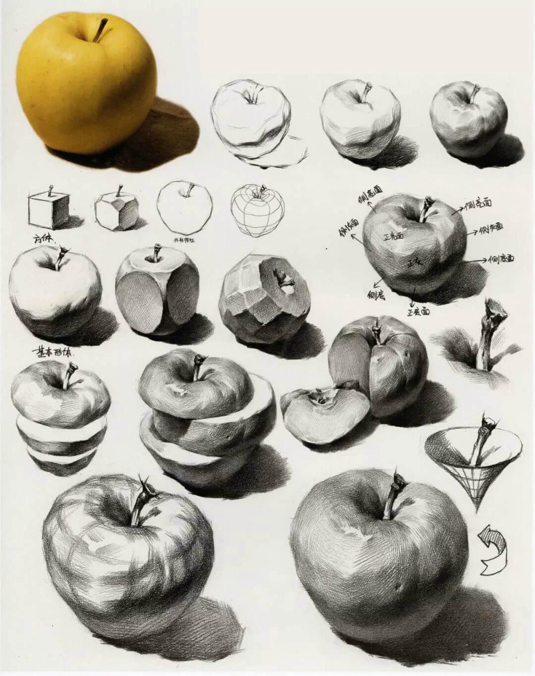 素描蘋果畫來畫去也就這樣?不如試著從結構上找突破!1